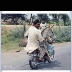 Donkey gets a ride!