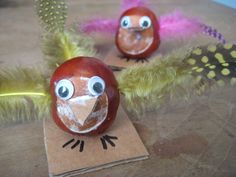 Conker birds!
