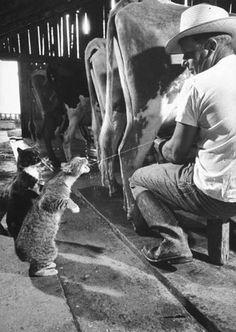 Farm Cats!