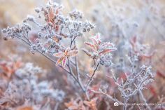 ***Magic Frost by April Bryant / State Of Tennessee, Ice Crystals, Winter's Tale, Frost, Magic, Fantasy, Prints, Pictures, Photography
