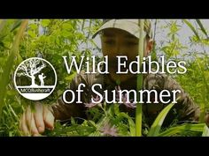 Wild Edible Greens, Foraging Your Own Wild Superfoods - YouTube