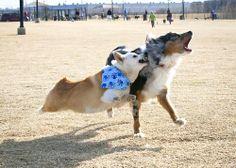 dog park fun!