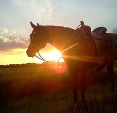 horses, so beautiful! Pretty Horses, Beautiful Horses, Animals Beautiful, Cute Animals, Horse Photos, Horse Pictures, Horse Girl, Horse Love, Cavalo Wallpaper