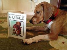 I'll help 'em find their nuts...