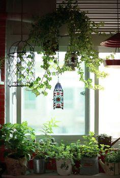 hanging plants in bathroom, herbs on windowsill in kitchen                                                                                                                                                      Mais
