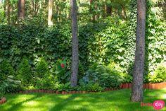 19 roślin, które będą rosły w zacienionych miejscach! - Twoje DIY Bonsai, Diy And Crafts, Pergola, Plants, Gardening, Bonsai Trees, Lawn And Garden, Bonsai Plants, Flora