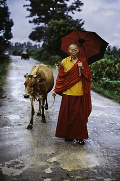 cow + man = beautiful. Tibet http://exploretraveler.com http://exploretraveler.net