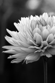 white flames 2 by thomasspipia - Plants In Black And White Photo Contest