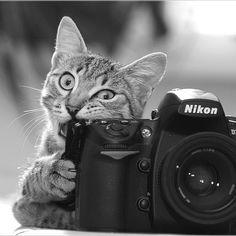 Tasty camera