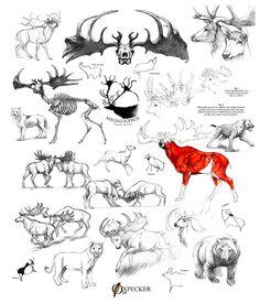Megaloceros giganteus (Irish elk) sketch dump by oxpecker || part of LOTR sleeve tattoo