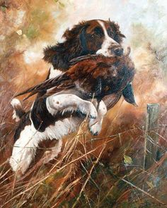 A collection of works by British artist John Trickett Wildlife Paintings, Wildlife Art, Animal Paintings, Hunting Art, Hunting Dogs, Chien Springer, Working Spaniel, Dog Words, English Springer Spaniel