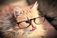 .hipster kitty