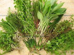 Live Aquarium freshwater plants - 50 stems
