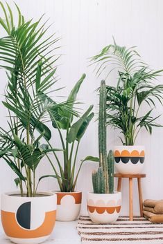 How Pop and Scott translate warmth, comfort, and playfulness into liveable design - cacti, ferns, house plants Hanging Plants, Potted Plants, Pots For Plants, Plantas Indoor, Pop And Scott, Painted Plant Pots, Painted Flower Pots, Decoration Plante, Best Indoor Plants