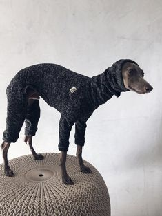 italian greyhound and whippet clothes / iggy clothes / Dog Sweater / ropa para galgo italiano y whippet/ BLACK JUMPSUIT Underwear, Italian Greyhound, Whippet, Black Jumpsuit, Jumpsuits, Dinosaur Stuffed Animal, Warm, Etsy, Dogs