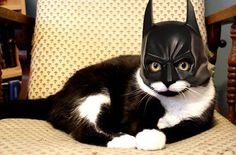 This looks just like my cat...
