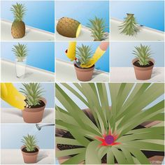 DIY How to Grow a Pineapple in a Plant Pot