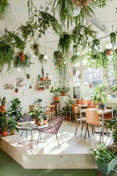 Amazing Indoor Jungle Decorations Tips and Ideas 41 Best Indoor Plants, Cool Plants, Indoor Hanging Plants, Green Plants, Outdoor Plants, Hanging Gardens, Dry Plants, Indoor Flowers, Patio Plants
