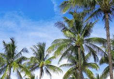 I always get asked what is the best time to visit Florida? The Sunshine State Florida has a tropical weather that will determine the high and low seasons. Visit Florida, Florida Living, Florida Vacation, Miami Florida, Vacation Trips, Fort Lauderdale, When Is Hurricane Season, Floride Miami, Florida Images