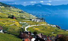 Genfersee - Lake Geneva