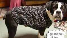 Schemi gratuiti di lavoro a maglia: il cappottino di lana per il cane