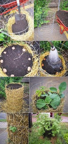 How to Build a Potato Tower - Gardening world