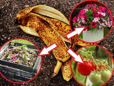 nawóz z bananów My Secret Garden, Organic Farming, Garden Gates, Indoor Plants, Flora, Food And Drink, Gardening, Gardens, Compost