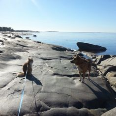 Cat and dog enjoying of spring day. Wooden Houses, Spring Day, Old Town, Finland, Four Square, Paths, The Good Place, Dog Cat, Swimming