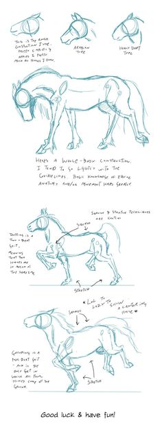 Some more sketches for class. Done in Photoshop with a Wacom Intuos 5 touch. Some more sketches for class. Done in Photoshop with a Wacom Intuos 5 touch. Drawing Techniques, Drawing Tips, Drawing Sketches, Painting & Drawing, Horse Drawing Tutorial, Sketching, Knife Painting, Drawing Ideas, Horse Drawings