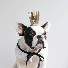 """""""It's True, I'm Royalty"""", a 'Crowned' French Bulldog                                                                                                                                                                                 More"""