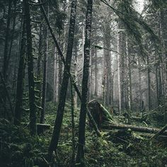 There's something special about a deep and dark forest, it just pulls me in.