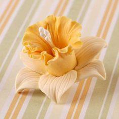 Daffodil Flowers – CaljavaOnline