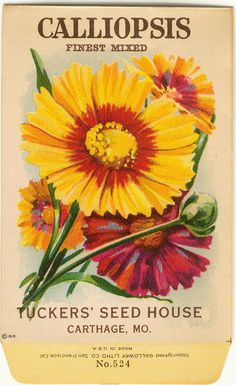 Vintage Flower Seed Packet Tuckers Seed House Lithograph CALLIOPSIS (Carthage, Missouri).