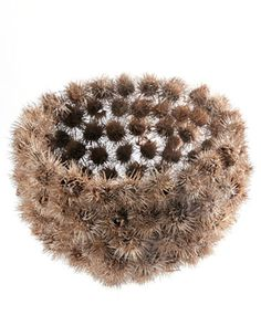 Contemporary Basketry. Fabulous. I could use all those gum nut seeds.