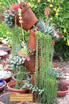 New Videos, Great Takeaways from Jeanne Meadow's Garden Stacked Pots, Meadow Garden, Dish Garden, Dry Leaf, Echeveria, Succulents Garden, Low Lights, Garden Beds, Cacti