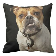 ==> consumer reviews          Portrait of tan and white bulldog with collar throw pillows           Portrait of tan and white bulldog with collar throw pillows so please read the important details before your purchasing anyway here is the best buyDiscount Deals          Portrait of tan and ...Cleck Hot Deals >>> http://www.zazzle.com/portrait_of_tan_and_white_bulldog_with_collar_pillow-189087947360700497?rf=238627982471231924&zbar=1&tc=terrest