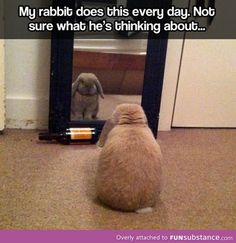 Introspective bunny