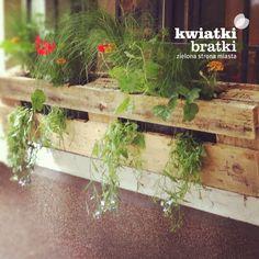 1/4 Europalety - http://kwiatkibratki.pl/kwiatkibratki-na-dzien-matki-relacja/