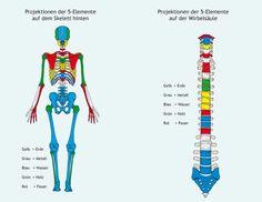 5-Elemente-Osteopathie