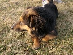 Ladybug is a low to the ground corgi style dog.  She appears to be mixed with a sheltie or collie type dog. She is very fun and spirited. Ladybug loves people. She is spayed and ready to go home. You can meet her at Metzgers Country Store in...
