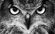 artblackwhite: Soulitaires VII: The Hypnotiser by rogercosta animal,bird,birds,black and white,england,hypnotizer,owl,wildlife,wise,Soulitaires,hypnot