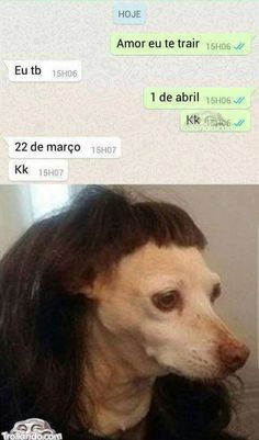 Cara não importa o texto a imagem desse cachorro eh de mais!!! JSBSJSJSNSN HELENA