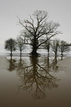 Google Image Result for http://upload.wikimedia.org/wikipedia/commons/9/95/Winter_Trees_mirrored_in_Croome_River_-_geograph.org.uk_-_335145.jpg