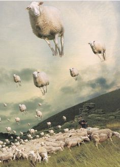 """Starting off a small section with sheep paintings/Illustrations This is by the wonderful artist Michael Sowa. His humorous pictures make me smile. Michael Sowa, Photomontage, Art Du Collage, Surrealist Collage, Sheep Art, Kunst Online, Surrealism Painting, Art And Illustration, Art Plastique"