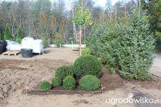 Ogród z lustrem - strona 5 - Forum ogrodnicze - Ogrodowisko