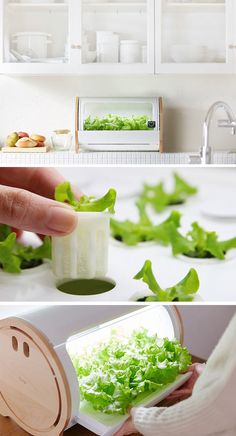 Countertop Hydroponic Gardens Are Making It Easy To Grow Your Own Greens