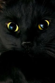 Is this one cute black kitten, or what? Black cats bring good luck & lve.