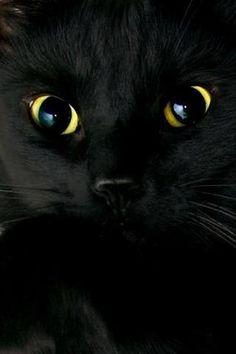 ~ black beauty ~