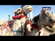 3al Jamal bi wasat Beirut - [official clip] Michelle & Noel Keserwany - YouTube Camel in Beirut song
