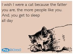 I wish I were a cat because the fatter  you are, the more people like you.   And, you get to sleep  all day